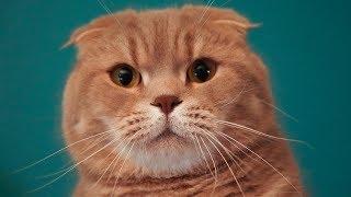 눈치-9단-고양이와-눈치싸움을-해봤어요