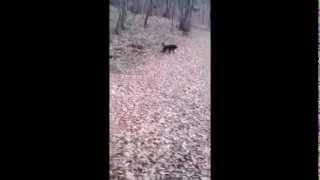 BLEKI - pas stvoren samo za najbolje!!!  ♥