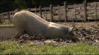 """Dokumentation """"Schweine für den Müllcontainer"""" (2013)"""