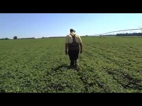 Crop Consultants Offer Expert Advice For Farming Decisions