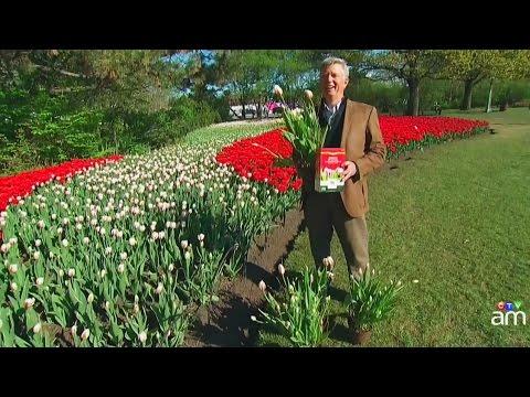 Full bloom: Historic Canadian Tulip Festival in Ottawa