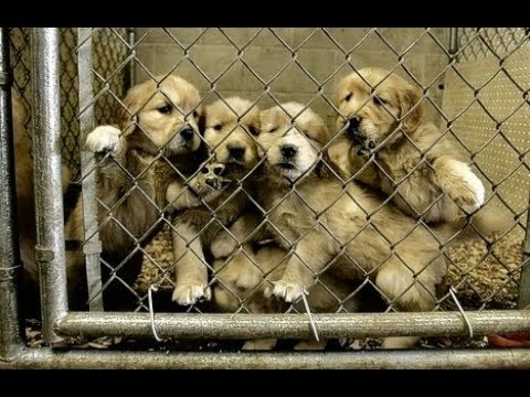 The Life Of A Mother On A Puppy 'Farm' .