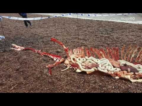 Loch Ness Monster Remains Found?