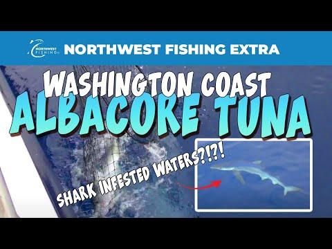 Hot Albacore Tuna Fishing Off The Washington Coast