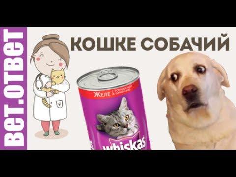 Вопрос: Можно ли собаке давать кошачий корм?