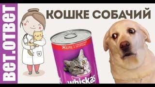 Кошке собачий, а котенку кошачий корм можно?