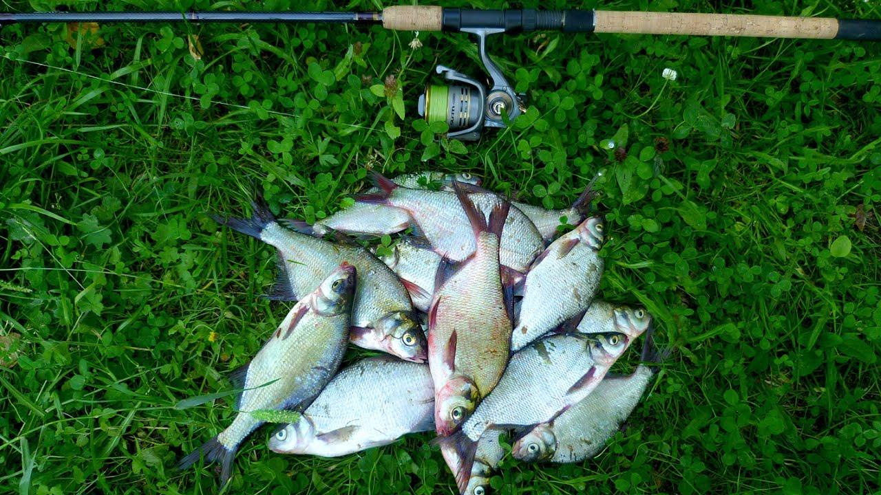 Мирная рыба на рыбалку