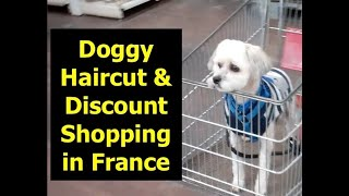 Ep 11 Our Lowchen Goes to his Dog Groomer in France, then Gifi Shopping