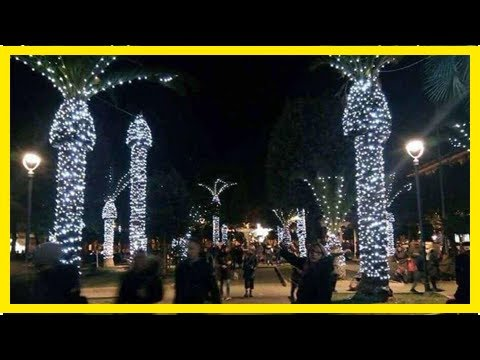 Italian Town Discovers Why You Should Never Put Christmas Lights On A Palm  Tree