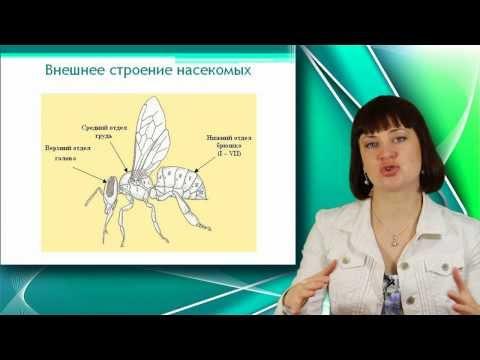 Подготовка к ЕГЭ по биологии: теория, тесты, курсы