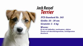 Jack Russel Terrier - Meister Petz Tv Rasseportrait Mpt 105