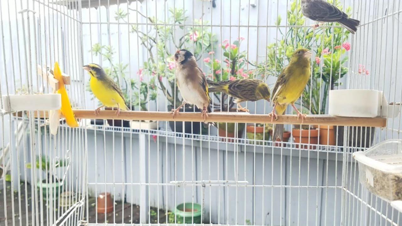 Nuevas Aves en el Aviario- New Birds in the Aviary