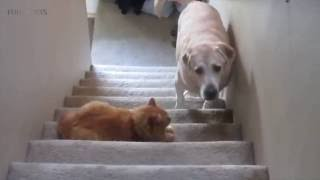 Funny Dogs Afraid Of Cats