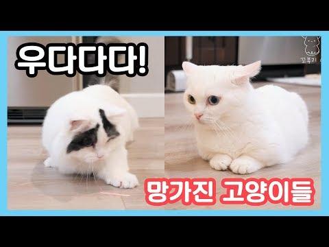 우다다다! 😺 레이저로 고장난 고양이들