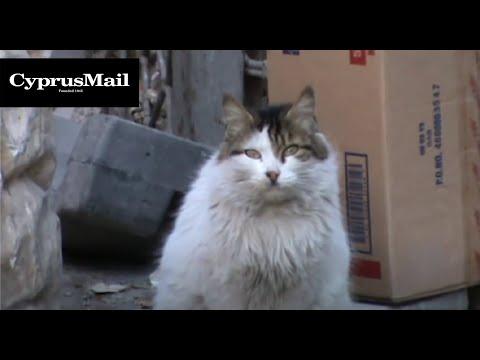 Street cats of old Nicosia