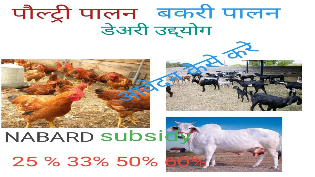 Government Subsidy on Poultry farming , goat farming, dairy farming by  NABARD full details