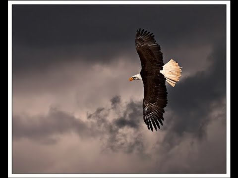 "TradCatKnight Radio: ""Eagles & The Storm"""