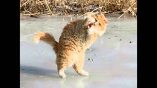 Прикольные клички для кошек