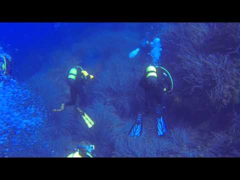 "tauchen auf Mallorca - Diving with ""Marina Tramontana Diving"" - Sa Foradada - Port De Soller - 2014"