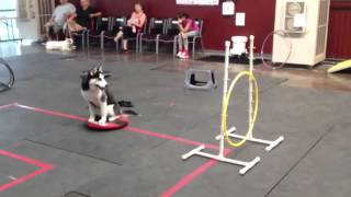 Sit Means Sit Dog Training, Group Class: 'jumping Through Hoops!'