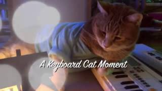 Keyboard Cat Moment