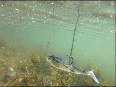 Saltwater Fishing + Pond Hopping Around Brookhaven, NY!