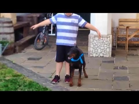 young boy and his Doberman outperforms professional dog trainers!