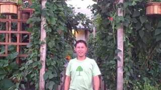 Extended Front Yard Urban Vegetable Garden Tour