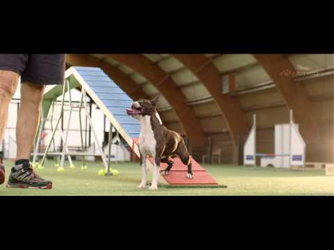 Dog - Agility Training – 4 Paws 2015 - Competition - Trailer