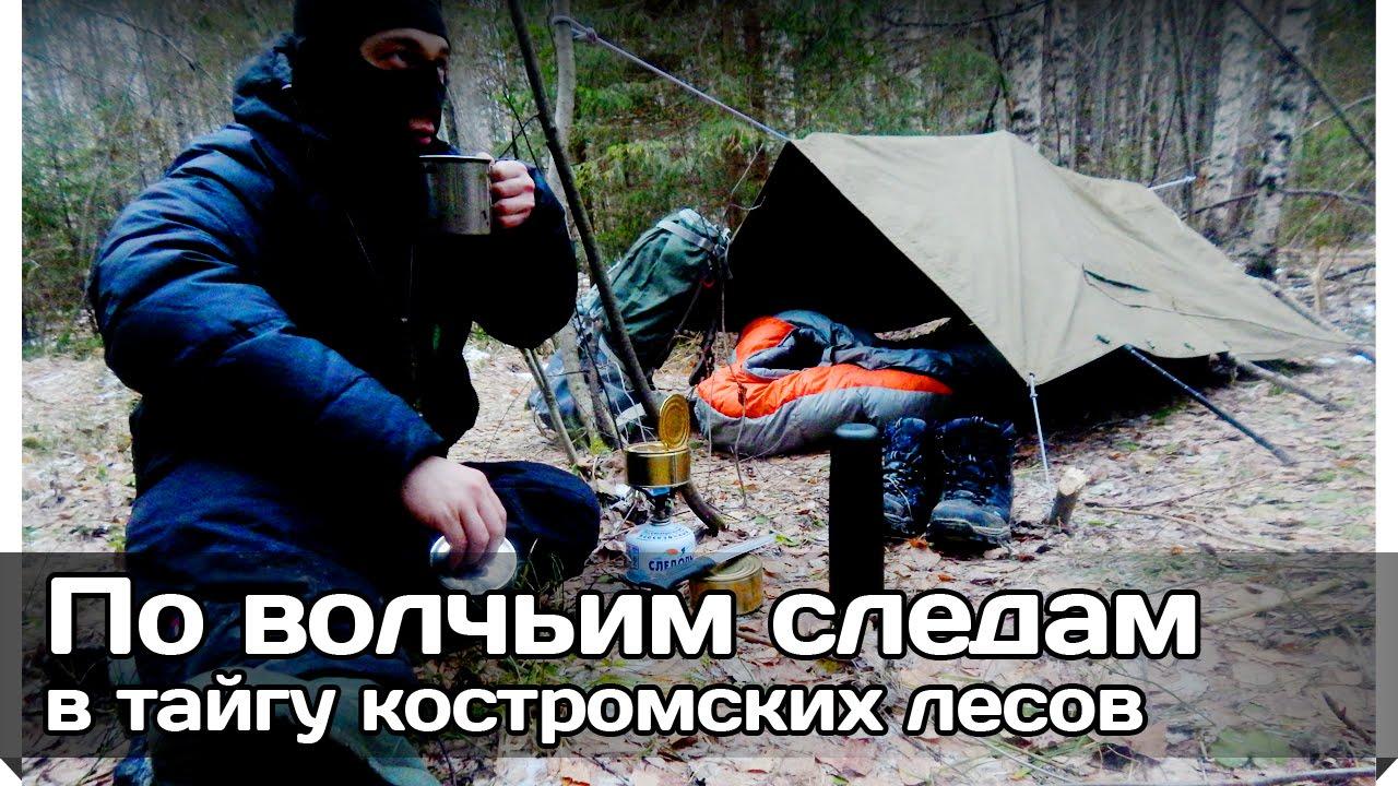 [РВ] Одиночный поход по волчьим следам в тайгу костромских лесов