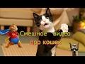 Смешное видео про кошек!
