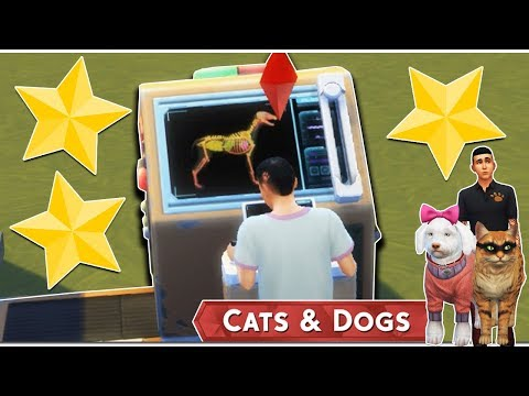 Az Állati Meló 🐕 - Mit tud ez az új masina? - 10. rész (Cats and Dogs)