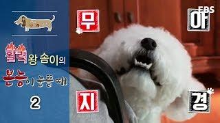 세상에 나쁜 개는 없다 - 활력왕 솜이의 본능이 눈 뜰 때_#002
