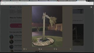 Palmetto Trees Snapped in Half in Sumter