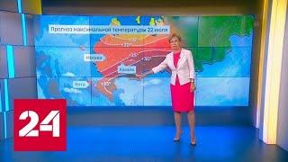 Обилие медуз у побережья Азовского моря превратило воду в желе. Погода 24 - Россия 24