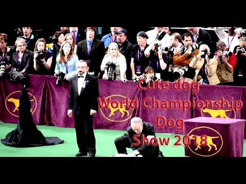Cute dog World Championship Dog Show 2018  group Working part 3 ♥♥AnimalS LovE