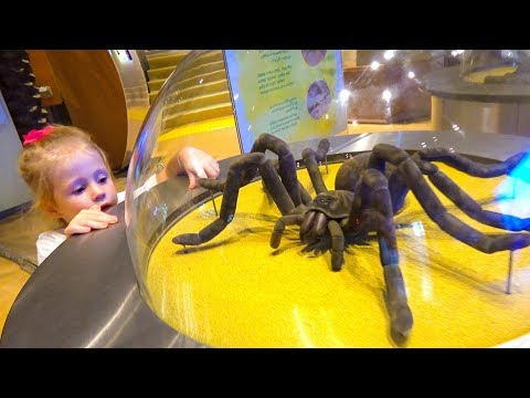 ستايسي والأب يلعبان في متحف العلوم للأطفال
