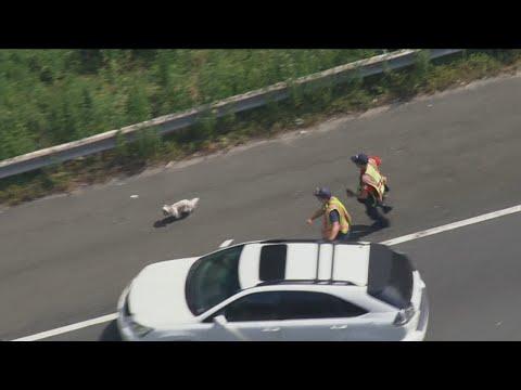 Dog safe after 7minute chase on I495 Beltway