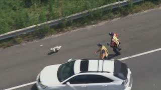 Dog safe after 7minute chase on I495 Beltway
