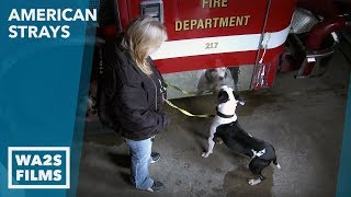 Firehouse Rescue - American Strays the series - Hope For Dogs Like My DoDo