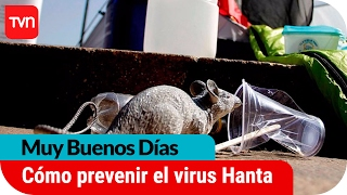 Muy buenos días | ¿Cómo prevenir el virus hanta?