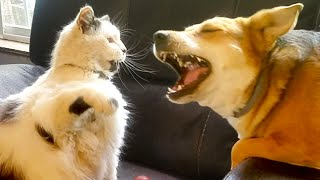 Cats and Dogs! Cute and Funny Videos