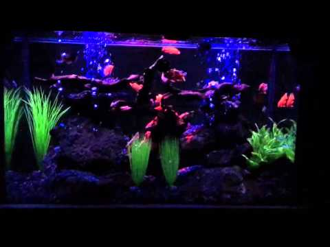 Aquarium Night LED And Neon Light System