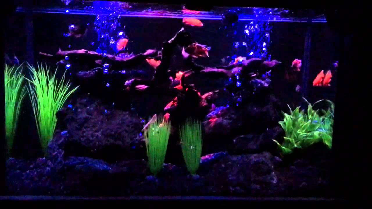 aquarium night led and neon light system youtube