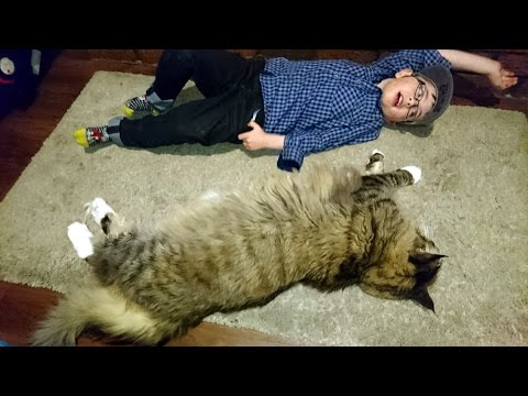 is-this-the-world's-longest-cat?