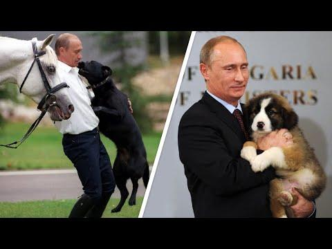 Смотреть фото Питомцы Владимира Путина - МИР24 новости Россия