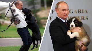 Питомцы Владимира Путина - МИР24