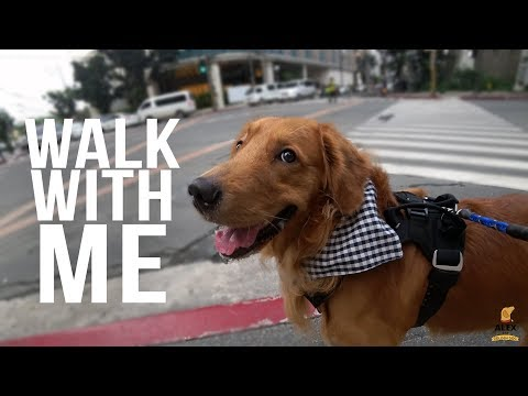 Walk With Me (Alex the Golden Dog's Daily Walk)