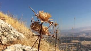 A HIKE UP MT. ARBEL - Biblical Israel Ministries & Tours