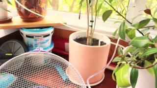 видео Система автоматического полива теплицы для растений и цветов на даче своими руками